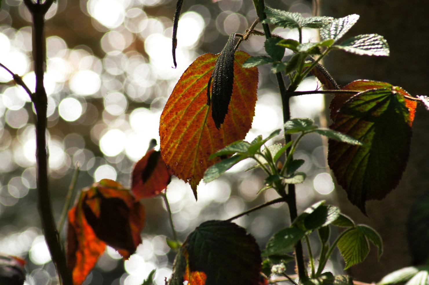 Blätter im Lichtgefunkel
